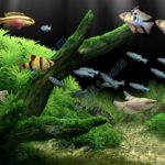 梦幻水族馆屏幕保护程序|破解版dream aquarium v10.2